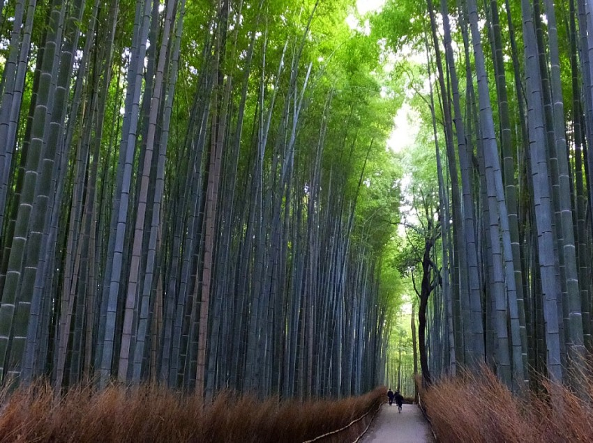 Bamboo – Tough and flexible