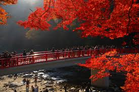 Hunting Autumnal Leaves (Momiji-gari)