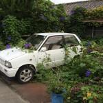Car & Asagao - 1