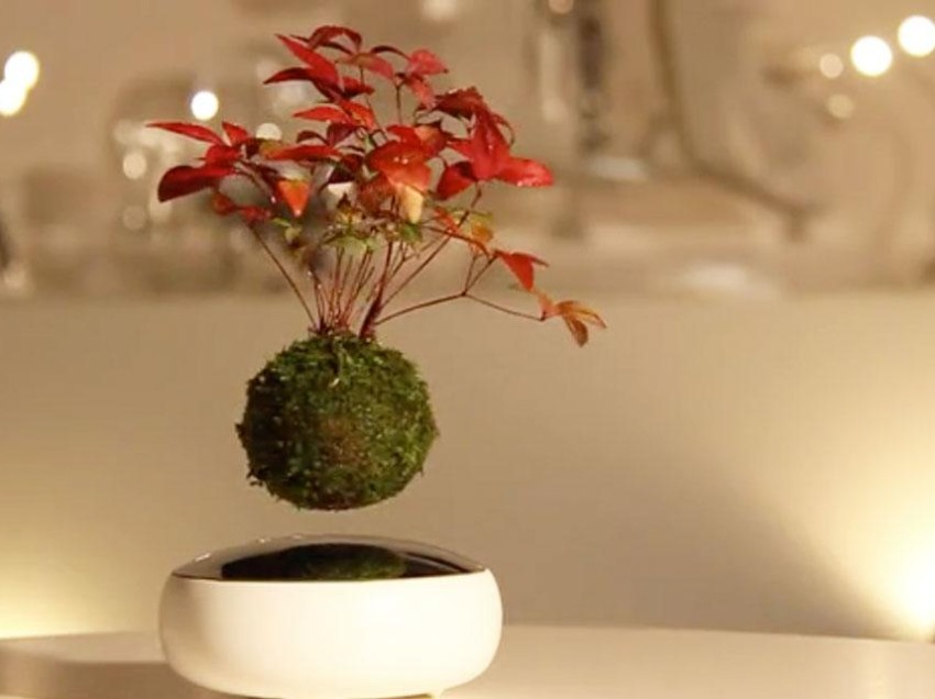 Beautiful Bonsai trees + Japanese ingenuity =