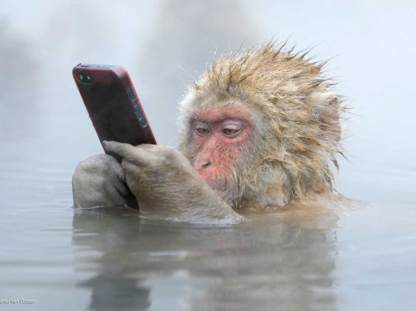 Ahhhh….Japanese monkeys in hot spring