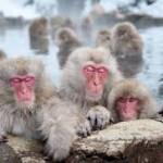 monkeys- 2