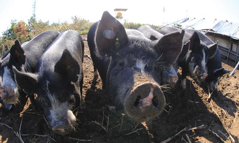 Okinawa and Pork