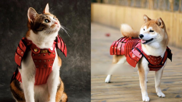 samurai pet 1