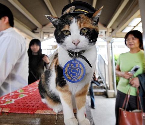 Station Master Cat TAMA