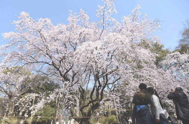Photo Journal: Flower shower