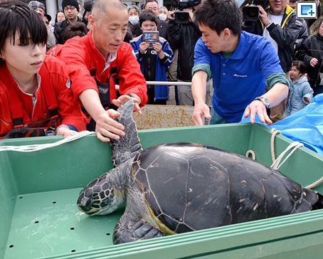 Star sea turtle's homecoming as aquarium gets ready to reopen