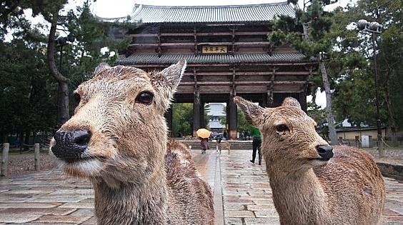 Nara for kids