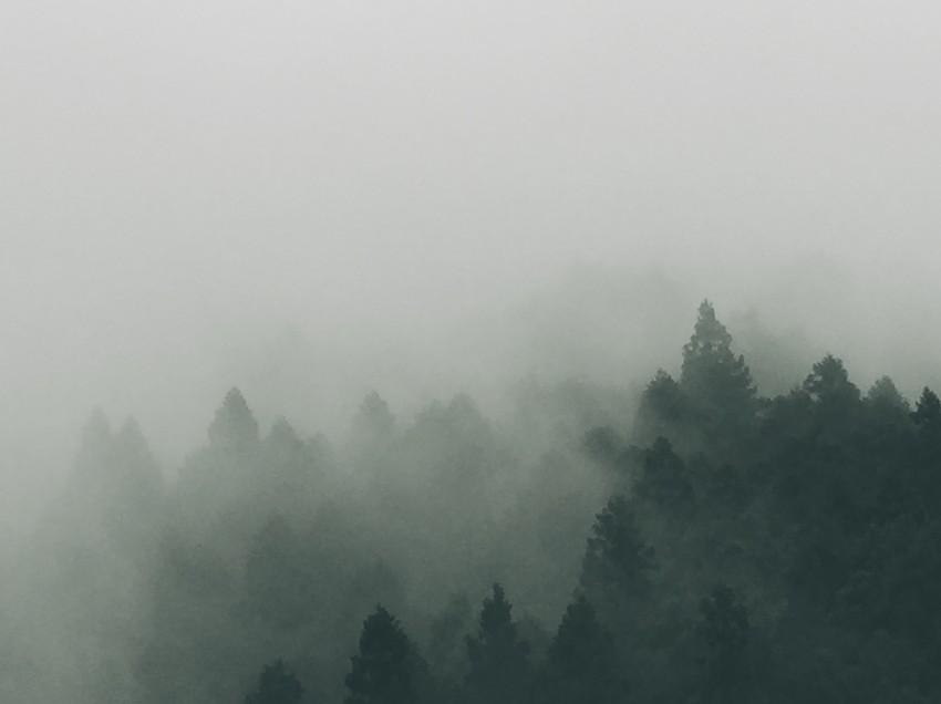 Forget sunbathing, how about forest bathing? (Shinrin Yoku)